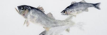 Marc Porrini - Exemple Gyotaku